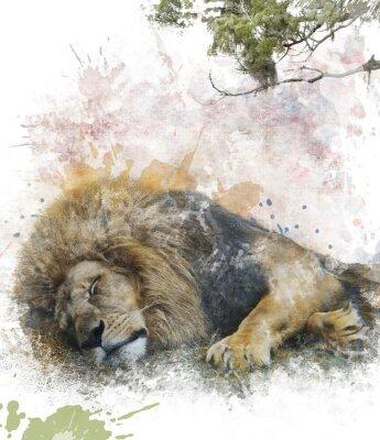 Quadro Acquerello Immagine Di Sleeping Lion