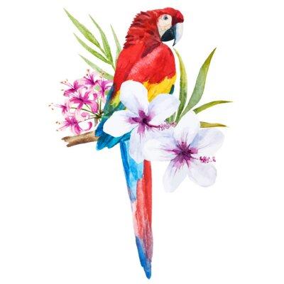 Quadro Acquerello pappagallo