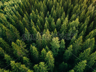 Quadro Aerial top view of summer green trees in forest in rural Finland. Drone photography