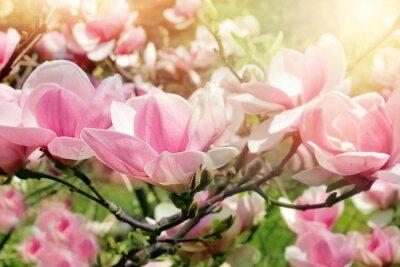 Quadro albero fiore di magnolia