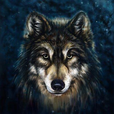 Quadro anteriore lupo