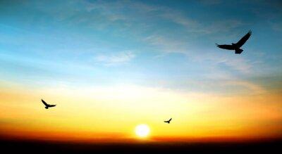 Quadro aquila in volo nel cielo bel tramonto