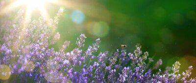 Quadro arte estate o in primavera bellissimo giardino con fiori di lavanda