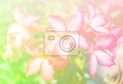 Quadro Astratta Confusa Di Fiore E Sfondo Colorato Bellissimi Fiori