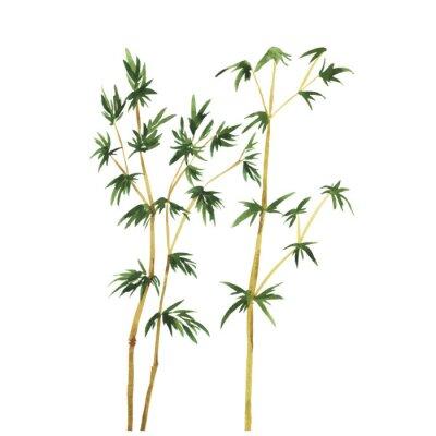 Quadro Astratti alberi di bambù selvatici su sfondo bianco. Illustrazione disegnata a mano acquerello vettoriale.