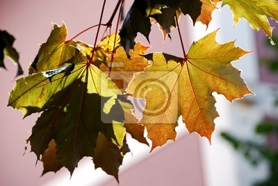 Quadro autunno