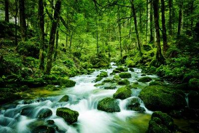 Quadro Bach foresta