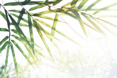Quadro Bamboos Foresta o fogliame di bambù e luce solare e spazio per il testo