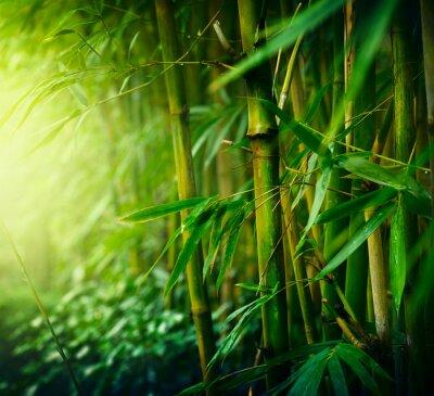 Quadro Bambù
