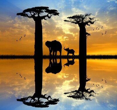 Quadro Baobab ed elefante al tramonto