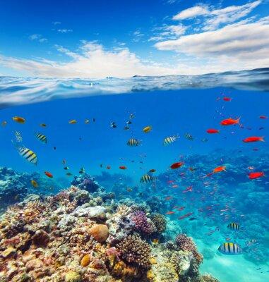 Quadro barriera corallina subacquea con onde orizzonte e acqua