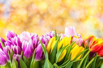 Quadro Beautiful tulip fiori