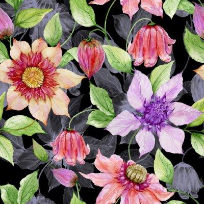 Quadro Bei fiori della clematide sui ramoscelli rampicanti contro fondo nero. Motivo floreale senza soluzione di continuità. Pittura ad acquerello Illustrazione dipinta a mano