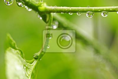 Quadro Bella foglia verde con gocce d'acqua