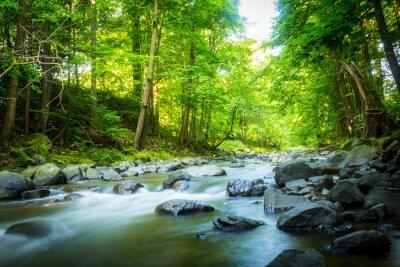 Quadro Bella ruscello di montagna da sogno nella foresta