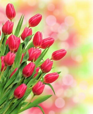 Quadro Bouquet di tulipani rosa su sfondo luminoso della natura