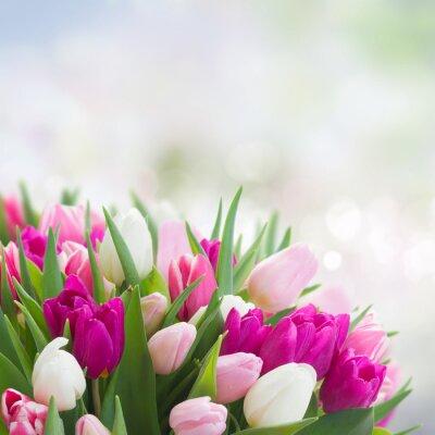 Quadro bouquet di tulipani rosa, viola e bianco