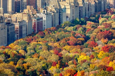 Quadro Brilliant fall colors of Central Park foliage in late afternoon. Aerial view toward Central Park West. Upper West Side, Manhattan, New York City