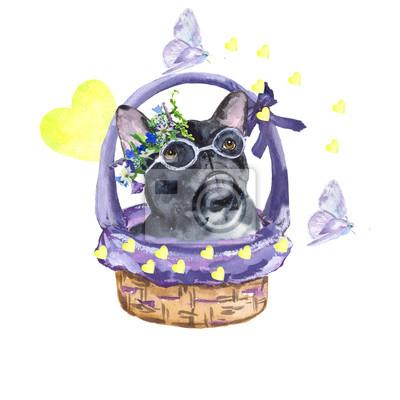 Quadro Bulldog francese. Cane di razza bulldog francese nel cestino. L'amore, la primavera, le farfalle. pittura ad acquerello. Può essere utilizzato per cartoline, stampe e design