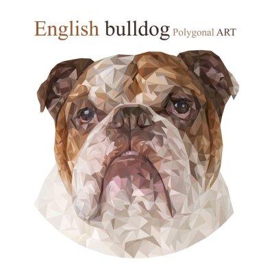 Quadro Bulldog inglese. disegno poligonale ..
