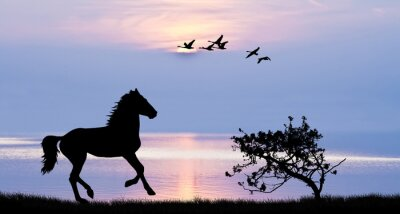 Quadro caballo corriendo por el lago