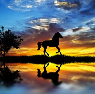 Quadro caballo salvaje en el lago