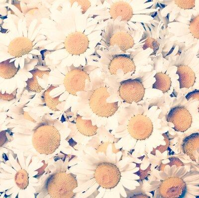 Quadro camomille fiori - stile vintage