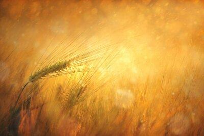 Quadro Campagna wheatfield soleggiata sfondo fantasy