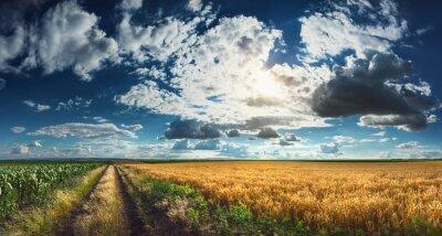 Quadro Campi di grano e mais prima della raccolta