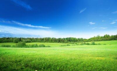 Quadro campo di erba e il cielo perfetto