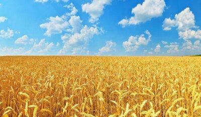 Quadro Campo di grano