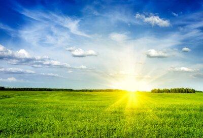 Quadro campo verde primavera estate paesaggio paesaggio