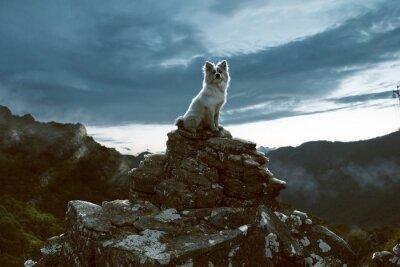 Quadro Cane si siede su una roccia in montagna