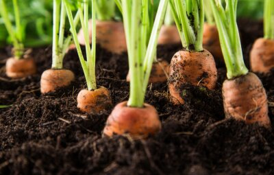 Quadro carote in giardino
