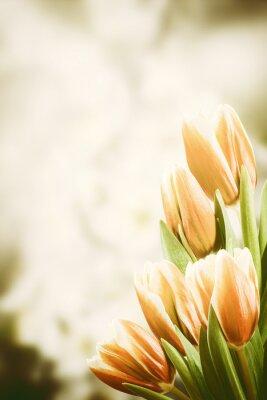 Quadro Cartolina d'epoca con tulipano