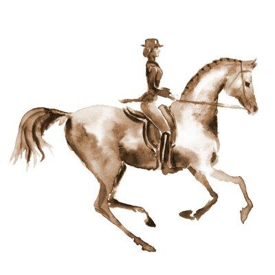Quadro cavaliere Acquerello e cavallo di dressage su bianco. Sport equestri. Mano pittura illustrazione equina.