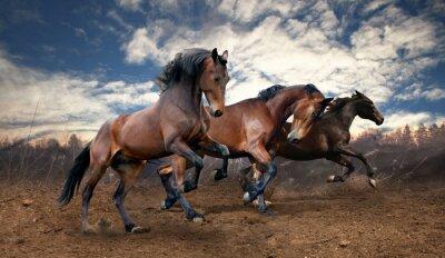 Quadro cavalli salto selvaggia baia