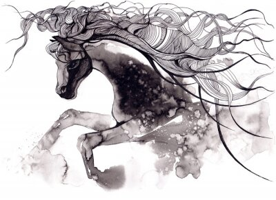 Quadro cavallo
