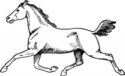 Quadro cavallo disegno Vintage
