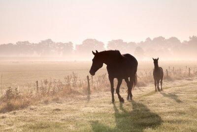 Quadro cavallo e puledro sagome nella nebbia