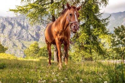 Quadro cavallo pascolo