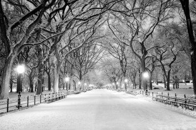 Quadro Central Park, NY coperto di neve all'alba