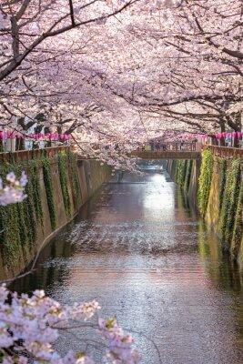 Quadro Cherry blossom allineato Meguro Canale a Tokyo, Giappone.