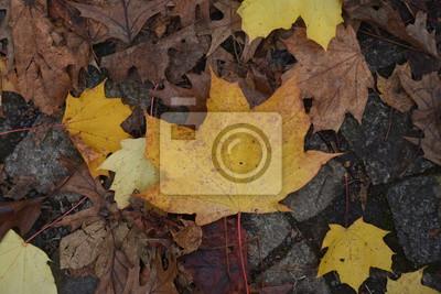 Parete Doro : Chiudere le foglie doro in autunno dipinti da parete u quadri