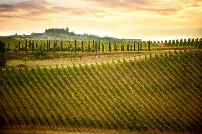 Quadro Colline del Chianti con vigneti e cipressi. Paesaggio toscano tra Siena e Firenze. Italia