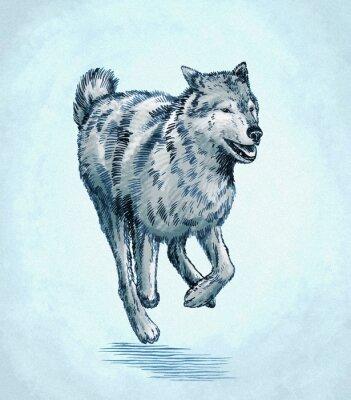 Quadro colore incide inchiostro disegnare lupo illustrazione