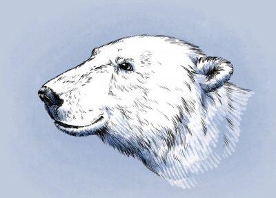 Quadro colore incidere vettore isolato orso