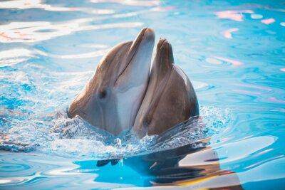 Quadro coppia di delfini ballare in acqua
