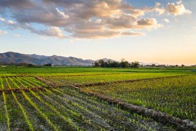 Quadro Corn Farm