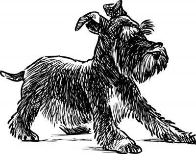 Quadro cucciolo schnauzer